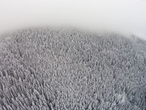 Snow-covered trees in a mountainous area during a fog.  Stock Photography