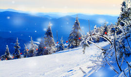 Snow covered trees in the mountains. With snow flakes falling Royalty Free Stock Images