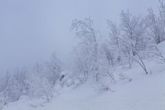 Snow-covered trees in the mountains Stock Photography