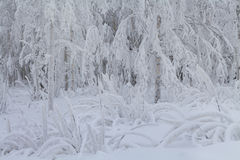 Snow-covered trees in the mountains Royalty Free Stock Photography
