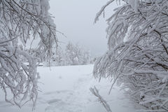 Snow-covered trees in the mountains Stock Image