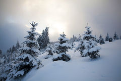Snow covered trees in the mountains Royalty Free Stock Image