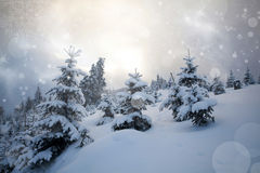 Snow covered trees in the mountains Stock Photography