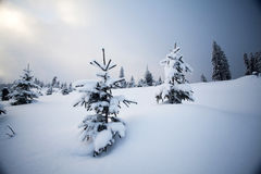 Snow covered trees in the mountains Royalty Free Stock Photo