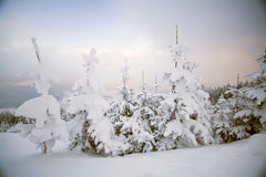 Snow covered trees in the mountains Stock Photo