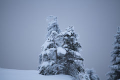 Snow covered trees in the mountains Royalty Free Stock Photography