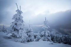 Snow covered trees in the mountains Stock Photos