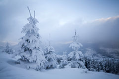 Snow covered trees in the mountains Stock Images