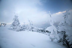 Snow covered trees in the mountains Royalty Free Stock Photos