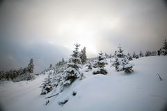 Snow covered trees in the mountains Royalty Free Stock Images