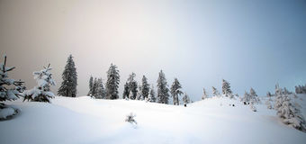 Snow covered trees in the mountains Stock Image