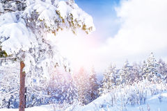 Snow covered trees in the mountains. At sunset. Beautiful winter landscape. Winter forest. Creative toning effect Stock Photo