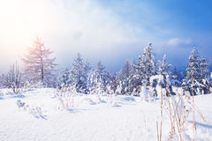Snow covered trees in the mountains. At sunset. Beautiful winter landscape. Winter forest. Creative toning effect Stock Photography