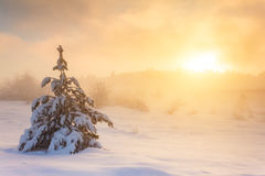 Snow-covered trees in the mountains at sunset. Royalty Free Stock Images