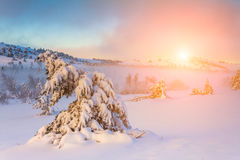 Snow-covered trees in the mountains at sunset. Stock Photo
