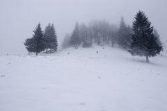 Snow Covered Trees in the Mountains. Winter Landscape. Royalty Free Stock Images
