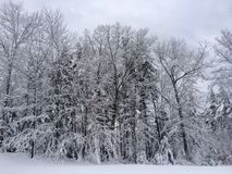 Snow covered trees. New England winter scene Royalty Free Stock Images
