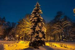 Snow covered trees at night in a park. Trees during a snowfall at night in the park stock photos