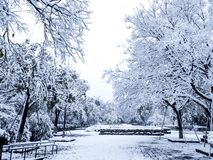 Snow covered trees in a nobody park. Shows an extreme freezing weather royalty free stock photos