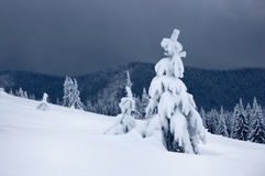 Snow-covered Trees On A Ridge Stock Images