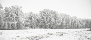 Snow-covered trees panorama Royalty Free Stock Photos