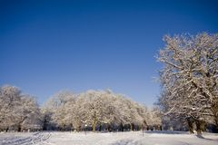Snow covered trees in park Royalty Free Stock Photos