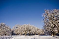Snow covered trees in park Stock Photos