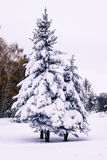 Snow-covered trees park. Snow-covered trees in the park Royalty Free Stock Photos