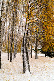 Snow-covered trees. In the park Royalty Free Stock Images