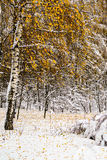Snow-covered trees. In the park Stock Images