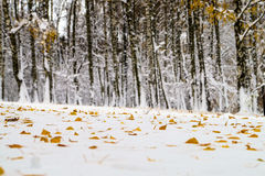 Snow-covered trees. In the park Royalty Free Stock Image