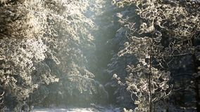 Trees in the hoarfrost against the blue sky. snow falls. Snow-covered trees in the park against the blue sky stock video footage
