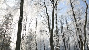 Snow-covered trees in the park against the blue sky. Snow-covered trees in the park against the blue sky stock footage