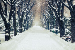 Snow covered trees in the park alley. Snow covered trees in the park with a snowy alley between them. In the distance there are silhouettes of people royalty free stock images
