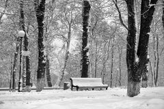 Snow-covered trees in the park Stock Photography