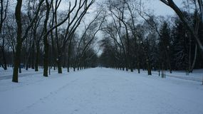 Snow covered trees in park. The snow covered trees in the mall area of Central Park in New York City Royalty Free Stock Photo