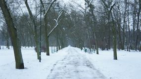 Snow covered trees in park. The Mall in Central Park, NYC, during a snow storm, early in the morning Stock Images