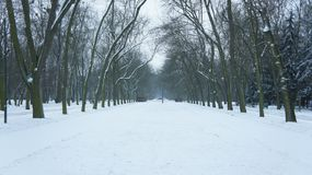 Snow covered trees in park. The Mall in Central Park, NYC, during a snow storm, early in the morning Stock Photos