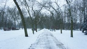 Snow covered trees in park. The Mall in Central Park, NYC, during a snow storm, early in the morning Royalty Free Stock Photos