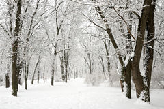 Snow-covered trees in park Royalty Free Stock Photos