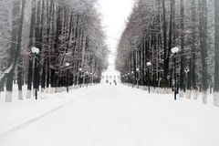 Snow-covered trees  in  park Stock Images