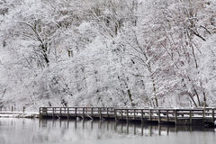 Lake Shore In Winter Stock Photography