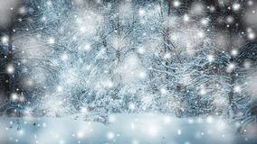 Snow-covered trees plants forest in winter filter, effect. Natural winter Christmas New Year background. Woodland snow under. Cinemagraph seamless loop stock video footage