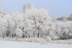 Snow-covered trees by the river stock photo