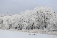 Snow-covered trees by the river stock photos