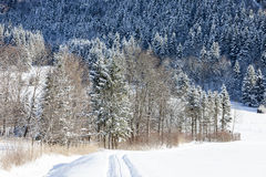 Snow covered trees and road, Alps Stock Images