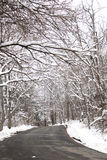 Snow covered trees on a road Royalty Free Stock Image