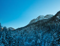Snow covered trees on the slopes of the German Alps Royalty Free Stock Image