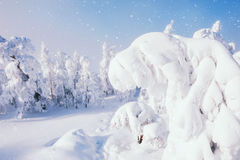 Snow-covered trees after snowfall Royalty Free Stock Photography