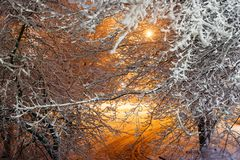 Snow covered trees after a snowfall in the street lights. Winter landscape Stock Image